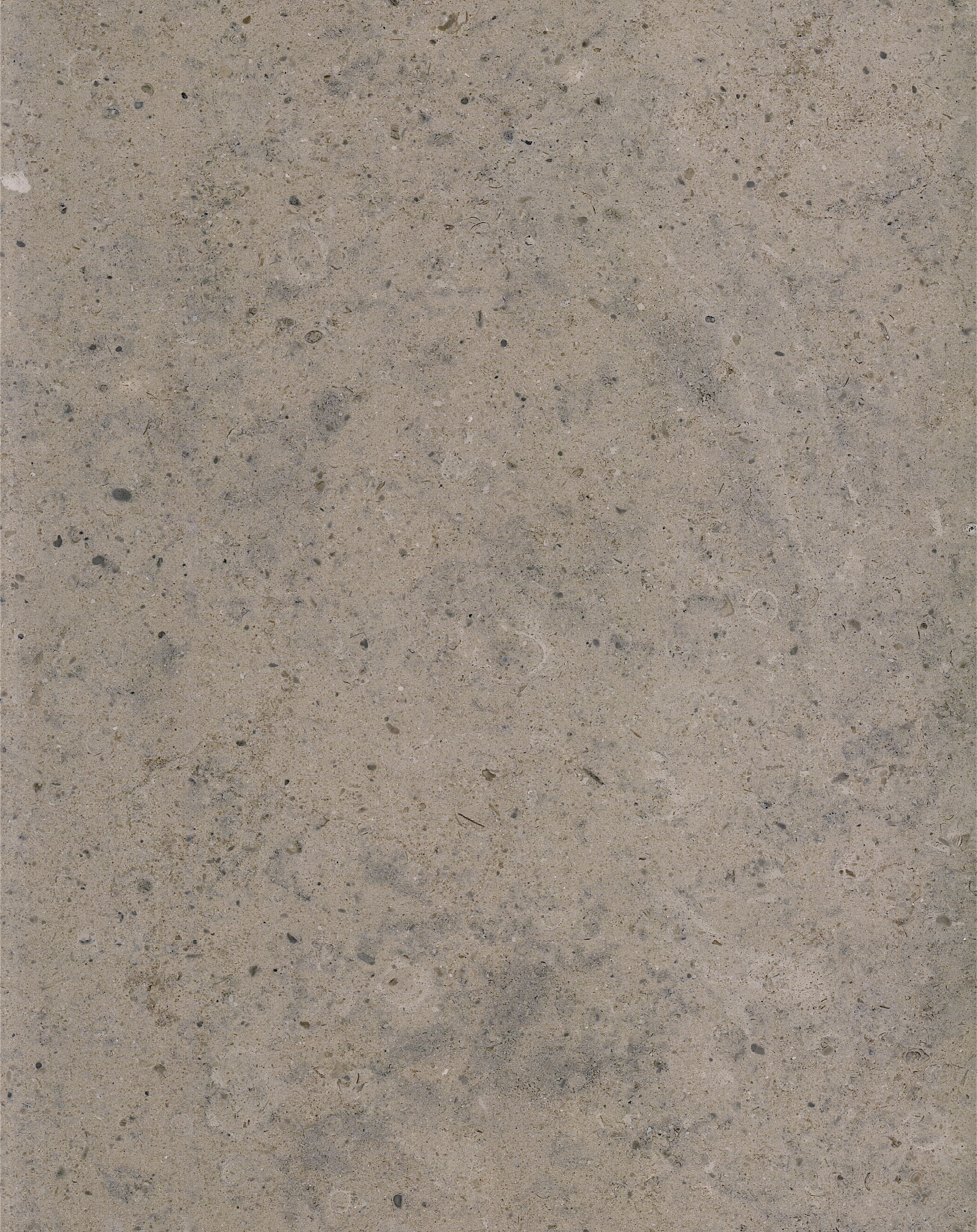 法國木紋(木化石)